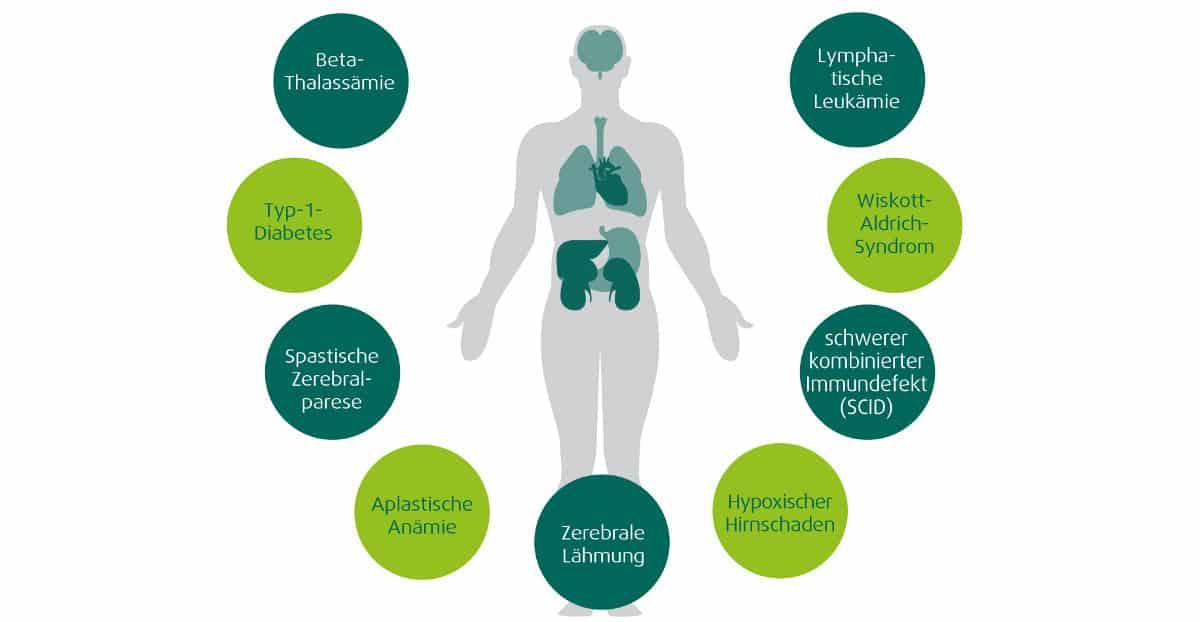 stammzellen-anwendung-organe-gewebe
