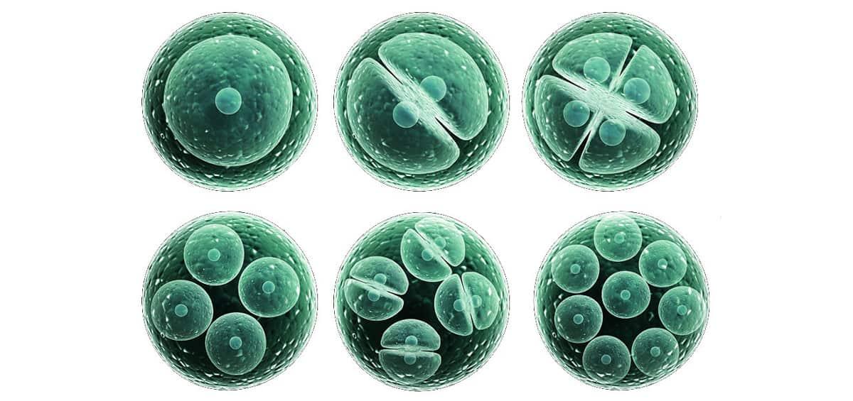 stem-cells-types-tasks-totipotent